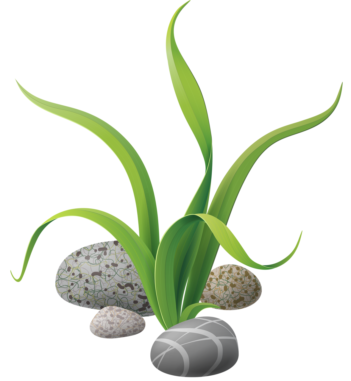 Algae stones png clip. Nautical clipart flower