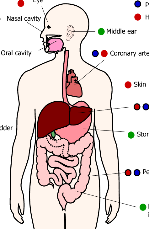Detection of helicobacter pylori. Neck clipart body chest