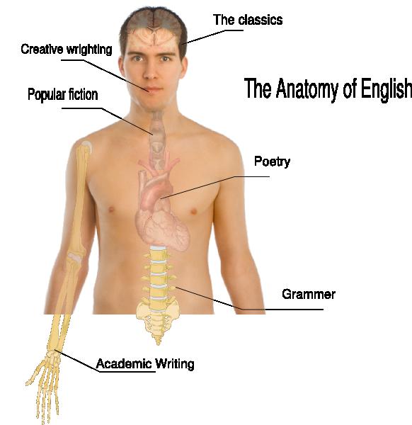 Neck clipart body chest. Human anatomy basics clip