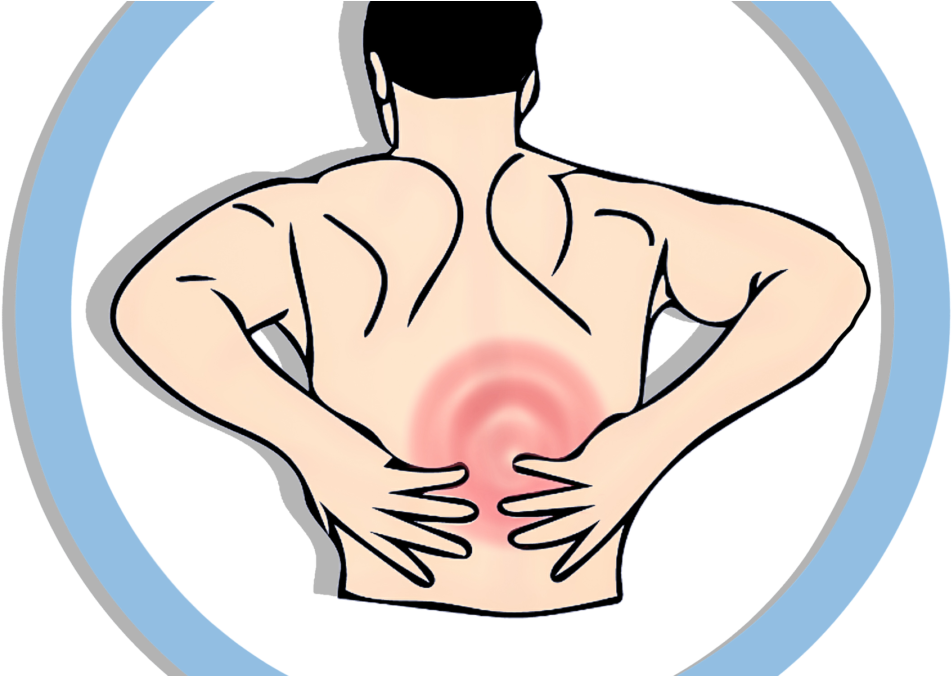 Muscular system png back. Neck clipart muscle ache