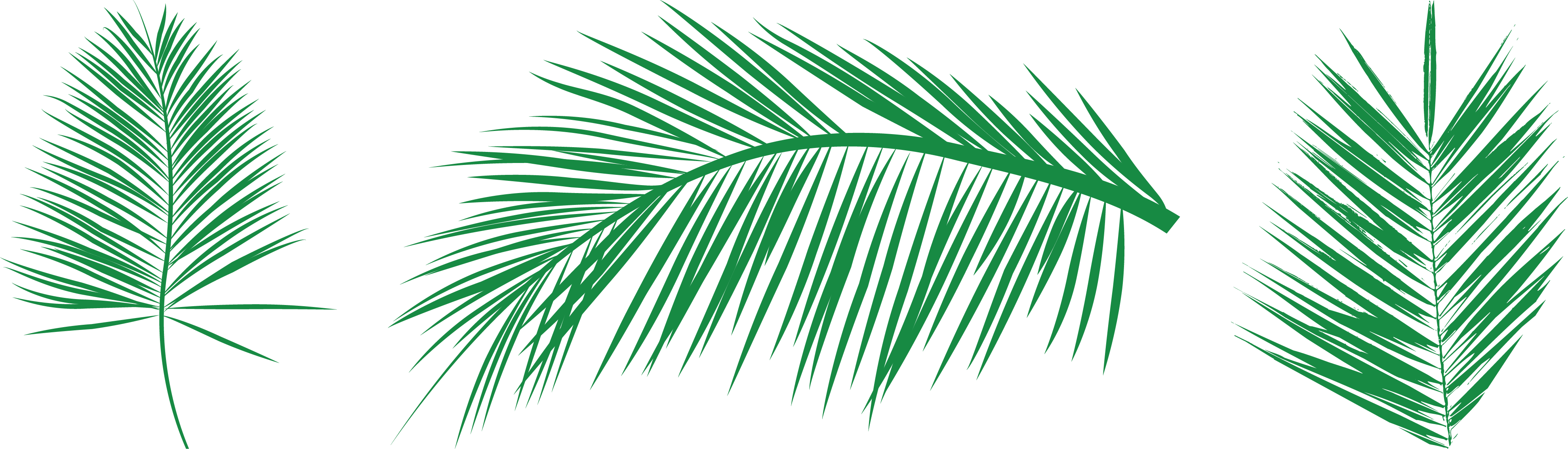 Palm clipart green branch. Leaf arecaceae clip art