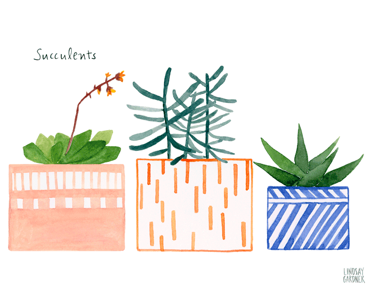 Neighborhood clipart watercolor. Succulents painting by lindsay
