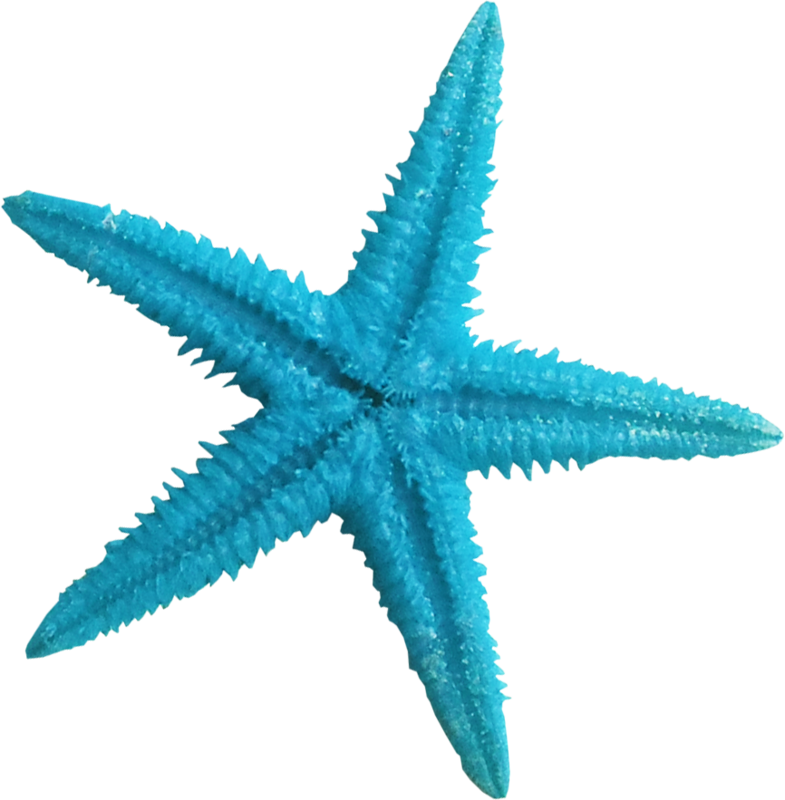 Ldw underpalmtree seastar blue. Shell clipart starfish wedding