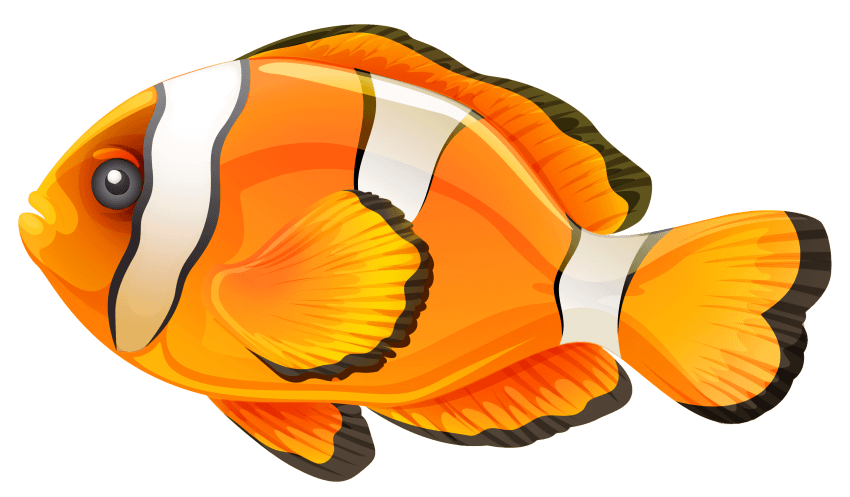 Png free images toppng. Nemo clipart fish tank
