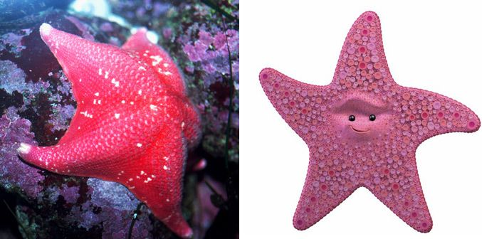 Real fish versus finding. Nemo clipart peach