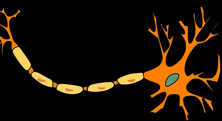 Nerves neuropathy free on. Nervous clipart instinct