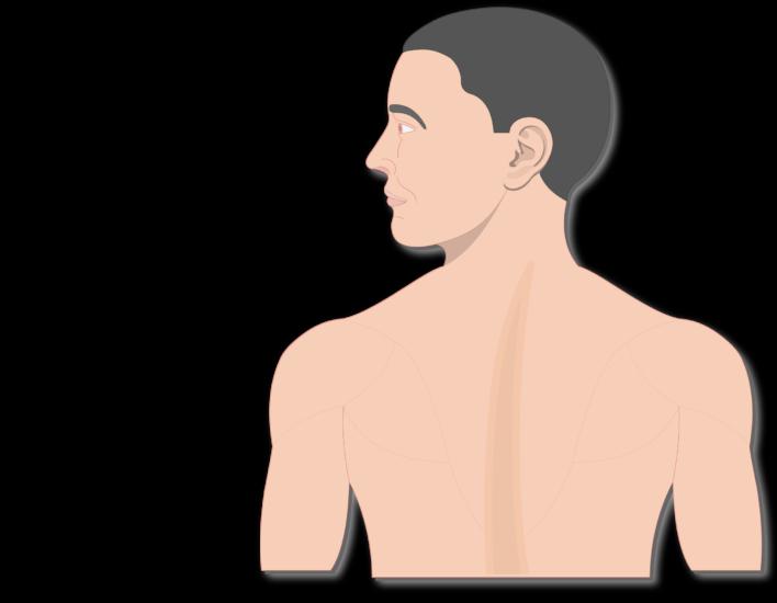Nervous clipart nervous man. Major organs and divisions