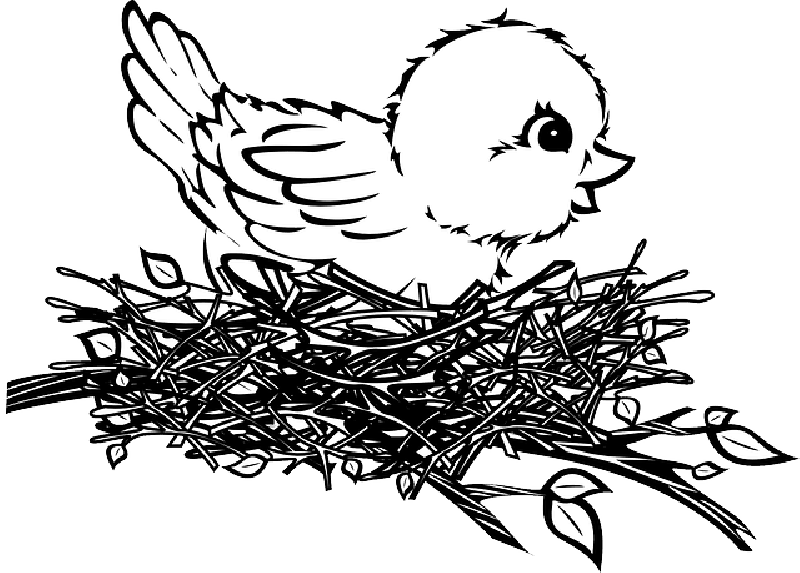 Nest clipart 4 bird. Birds drawing crazywidow info