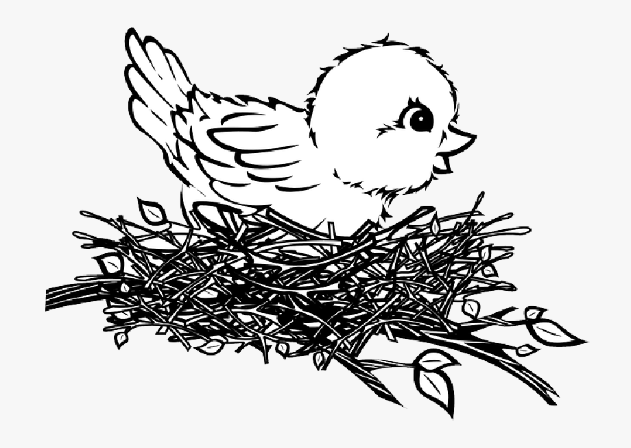 In a drawing free. Nest clipart 4 bird
