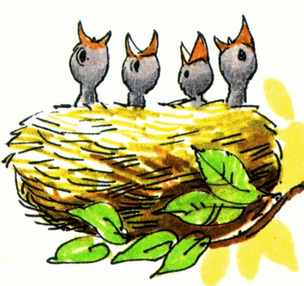 Birds free download best. Nest clipart baby bird