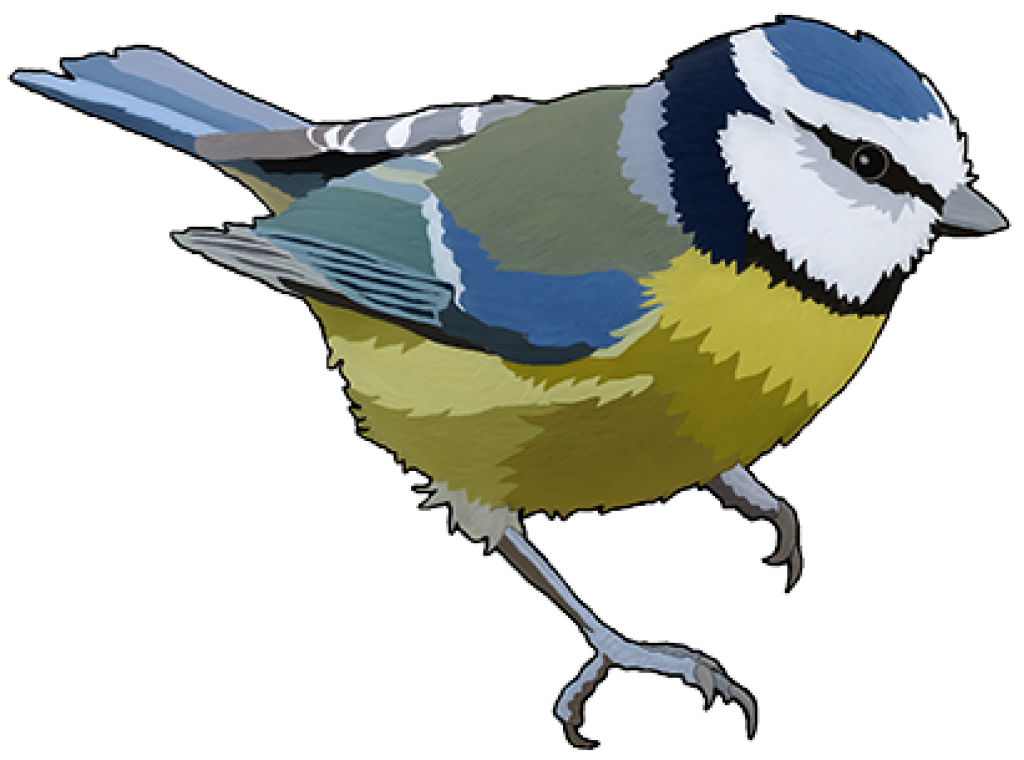 Nest clipart bird feed. Eurasian blue tit feeding