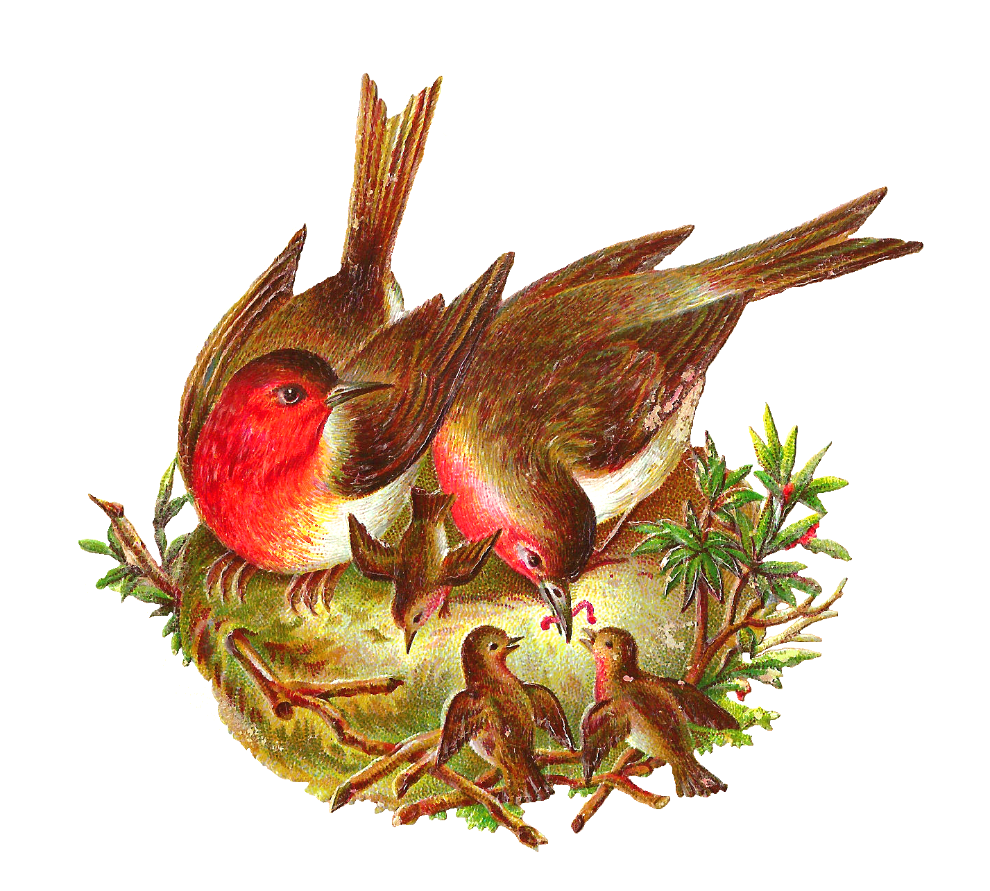 Antique images free graphic. Nest clipart bird feed