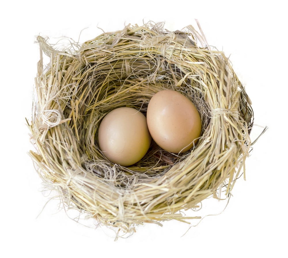 Clip art s transprent. Nest clipart bird food