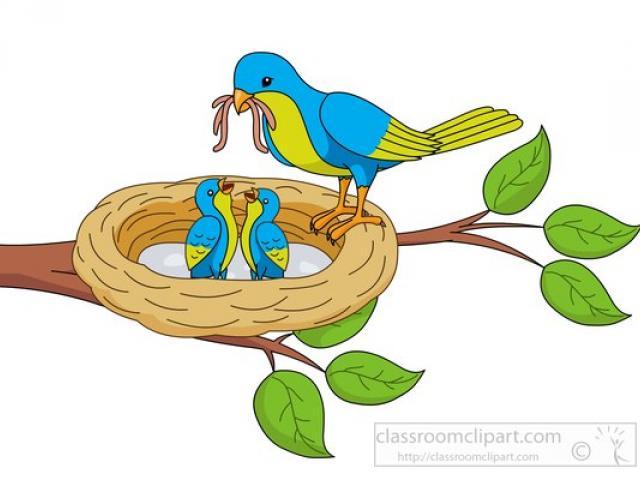 Free download clip art. Nest clipart bird food