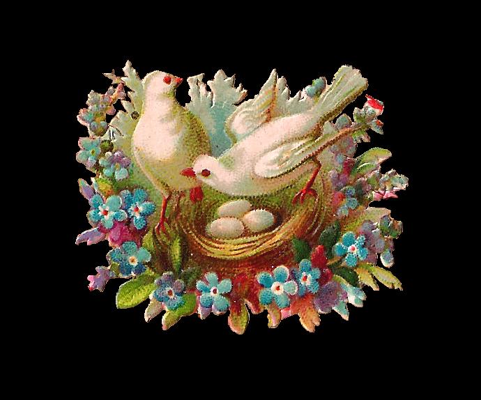Nest clipart bird victorian. Antique images free clip
