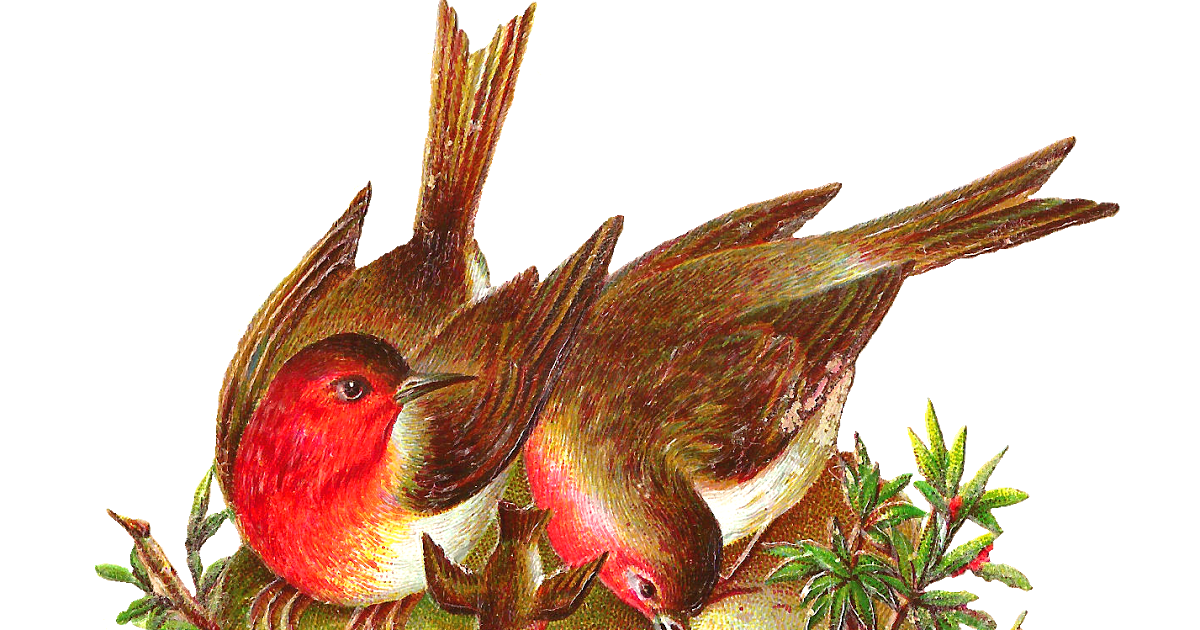 Nest clipart bird victorian. Antique images free graphic