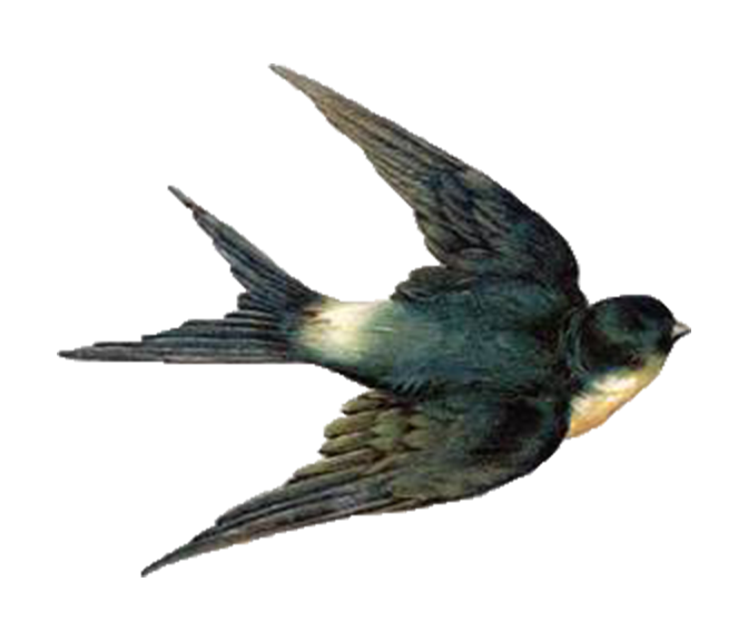 Nest clipart blue bird. Barn swallow flight clip