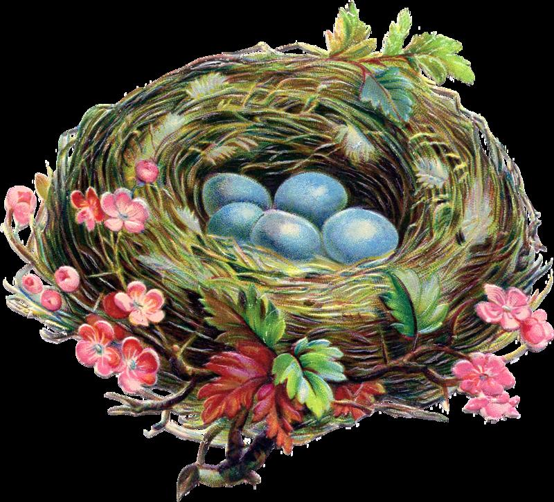 Nest clipart blue egg.  ephemera pinterest easter