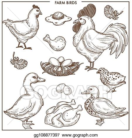 Nest clipart goose egg. Vector stock farm birds
