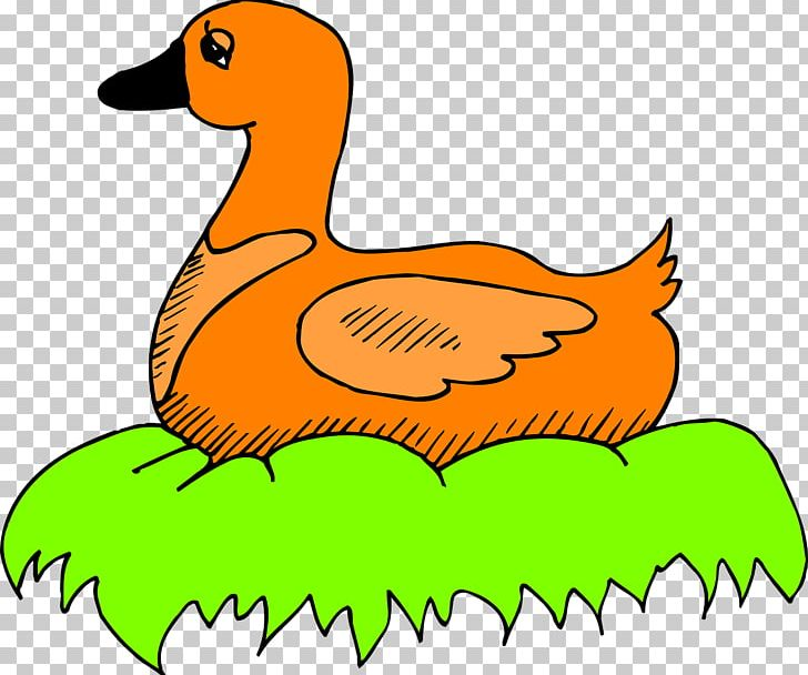 Duck bird png animal. Nest clipart goose egg