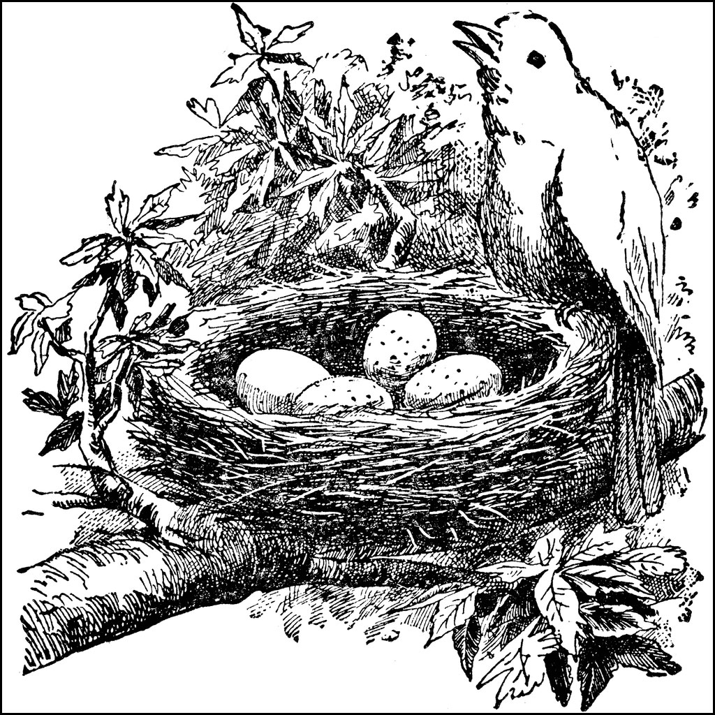 Bird nests etc . Nest clipart illustration