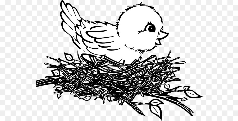 Download Free png Bird nest Drawing Clip art types of bird ...