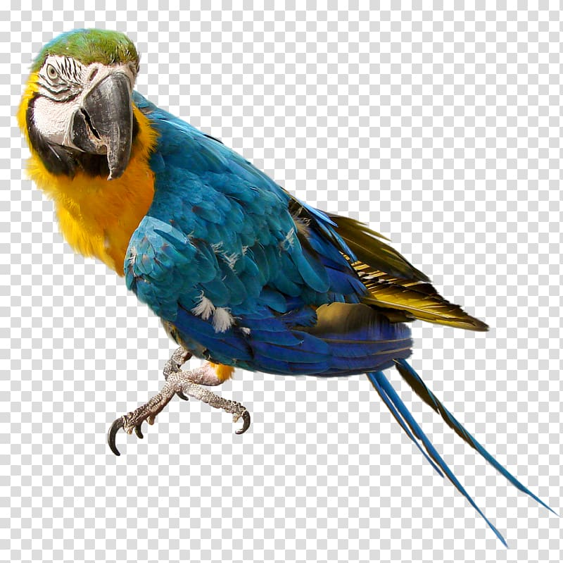 Nest clipart parrot nest. Bird columbidae background transparent