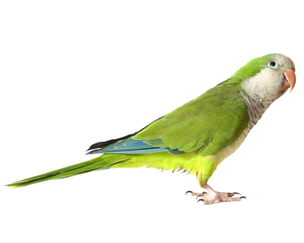 Nest clipart parrot nest. Green png images free