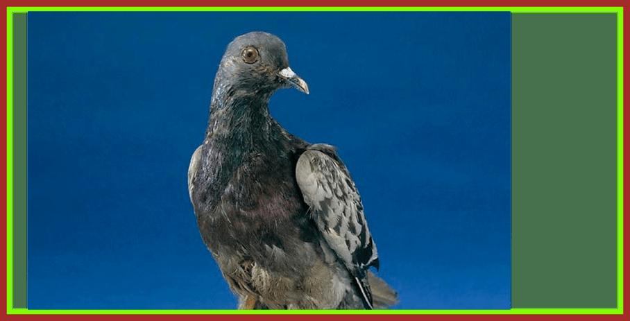 The best cher ami. Nest clipart pigeon nest