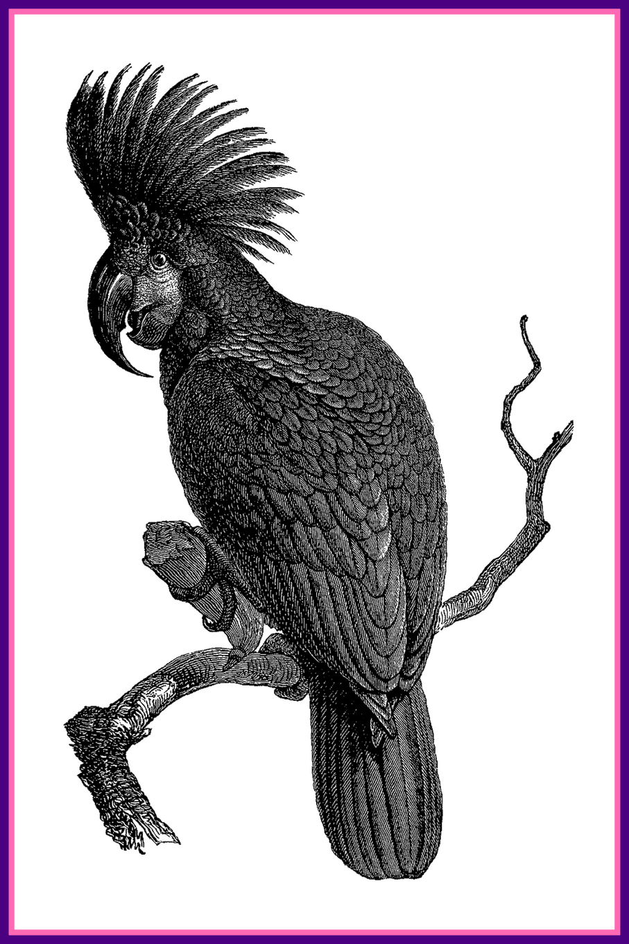 Incredible antique nest egg. Wing clipart pigeon wing