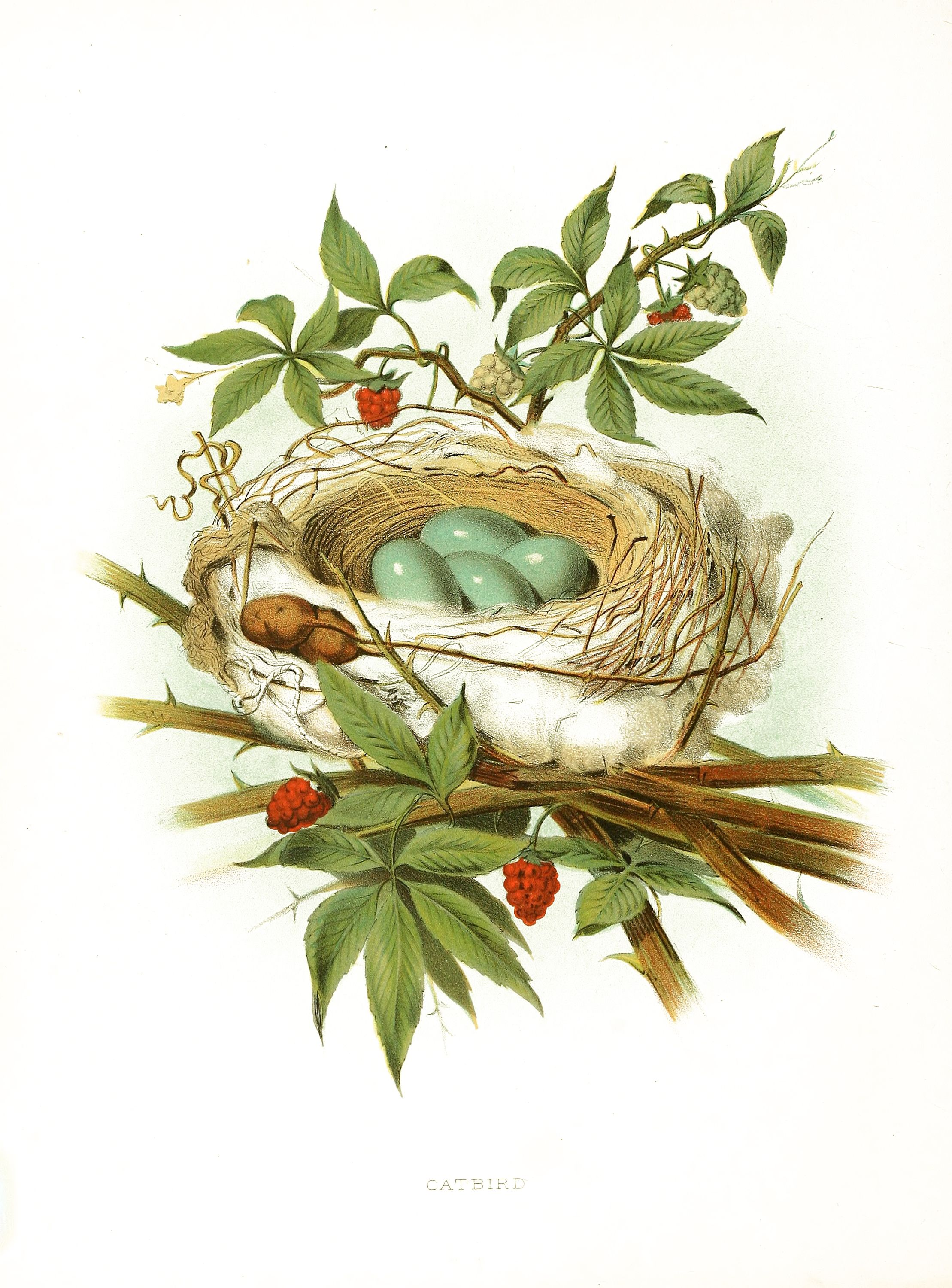 Nest clipart printable. Instant art gorgeous with
