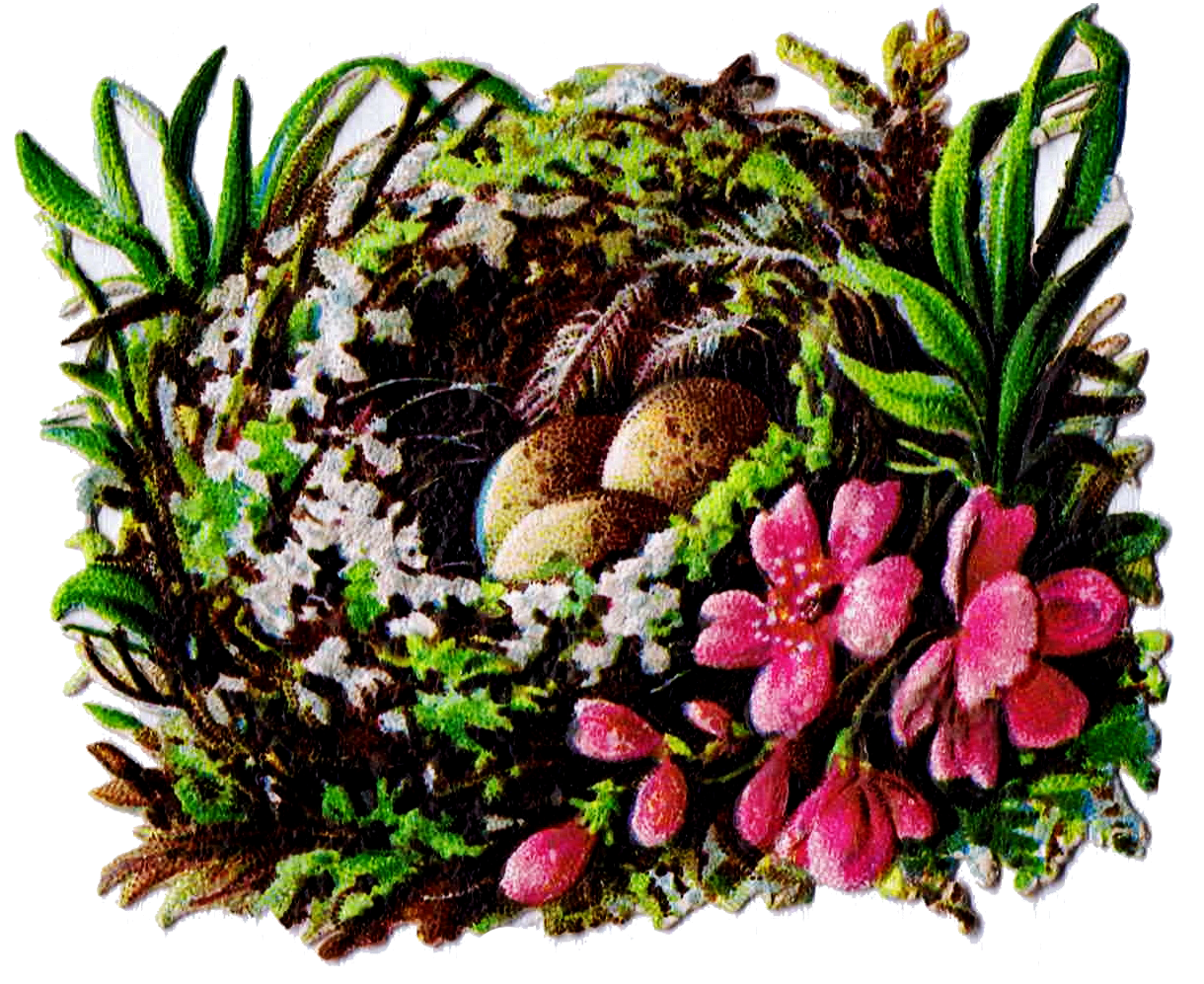 Nest clipart printable. Bird and egg graphics