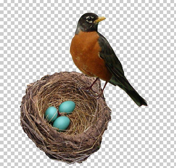 The robin s bellingham. Nest clipart robins nest