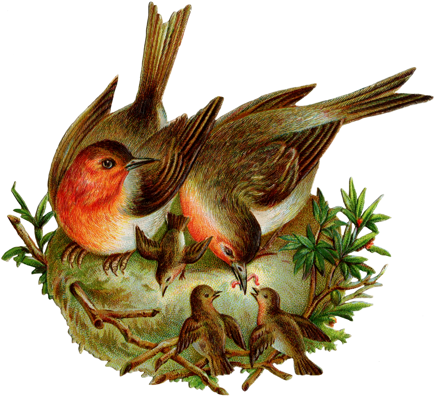 Nest clipart robins nest. Vintage image with and