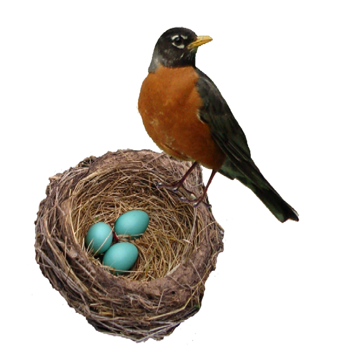 Hotel r best deal. Nest clipart robins nest