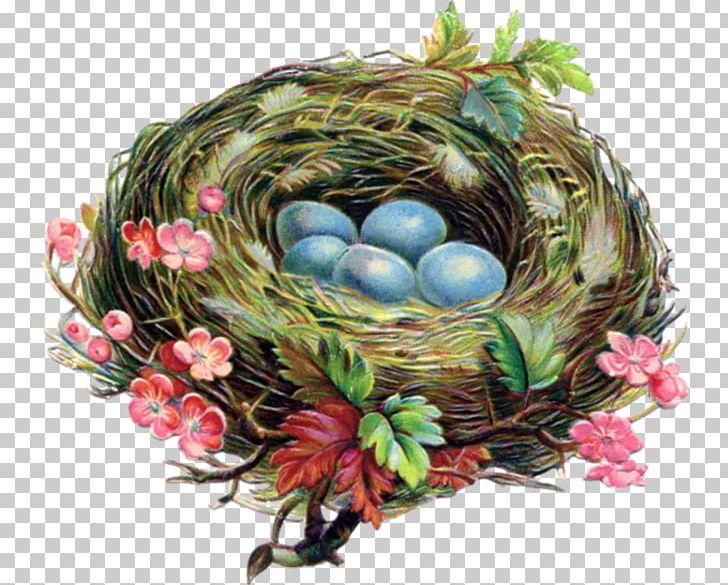 Nest clipart robins nest. Bird american robin egg