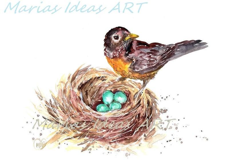 Robin birds bird in. Nest clipart robins nest