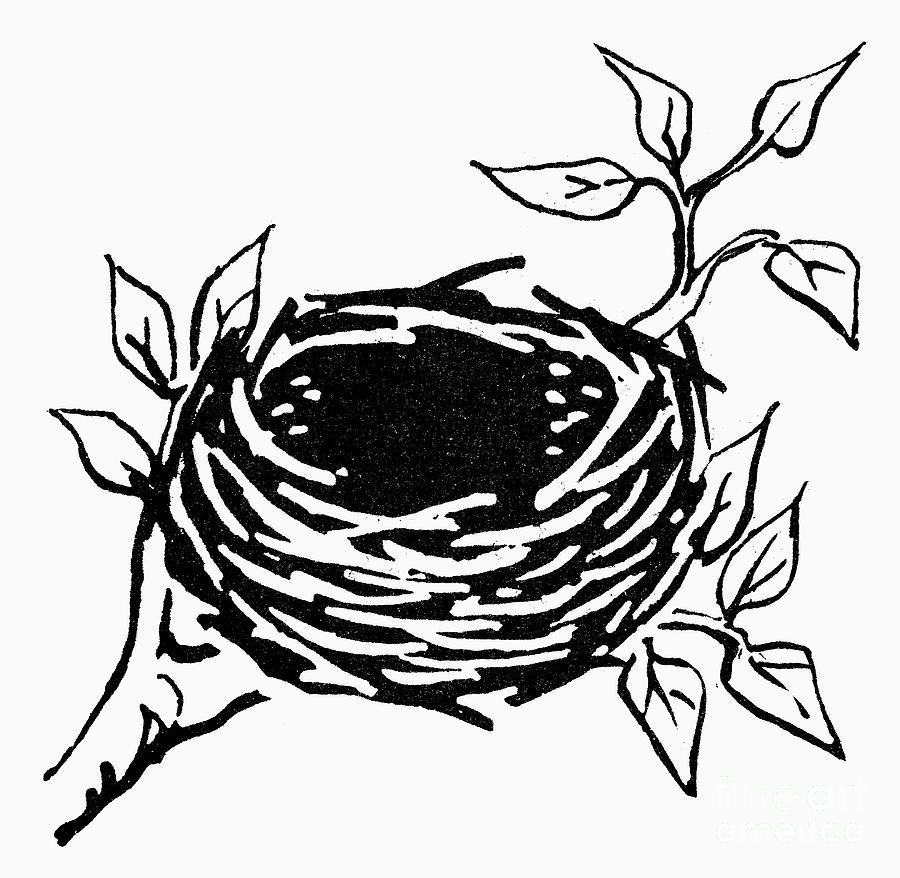 Nest clipart simple. Bird s illustration nests