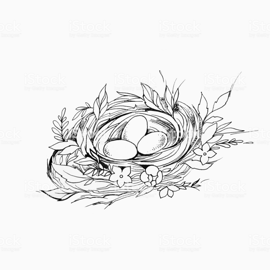 Nest clipart sketch bird. Graphics illustration egg drawing