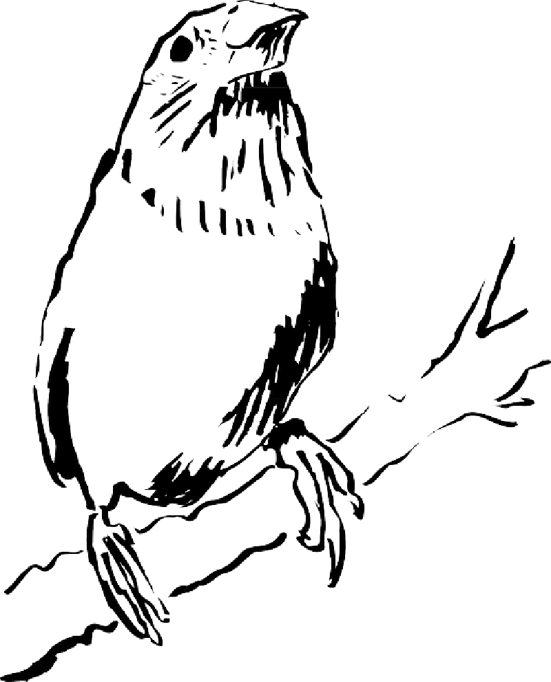 Nest clipart sketch bird. On branch drawing at