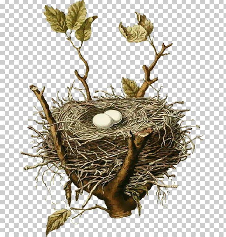 Edible bird s house. Nest clipart sparrow nest