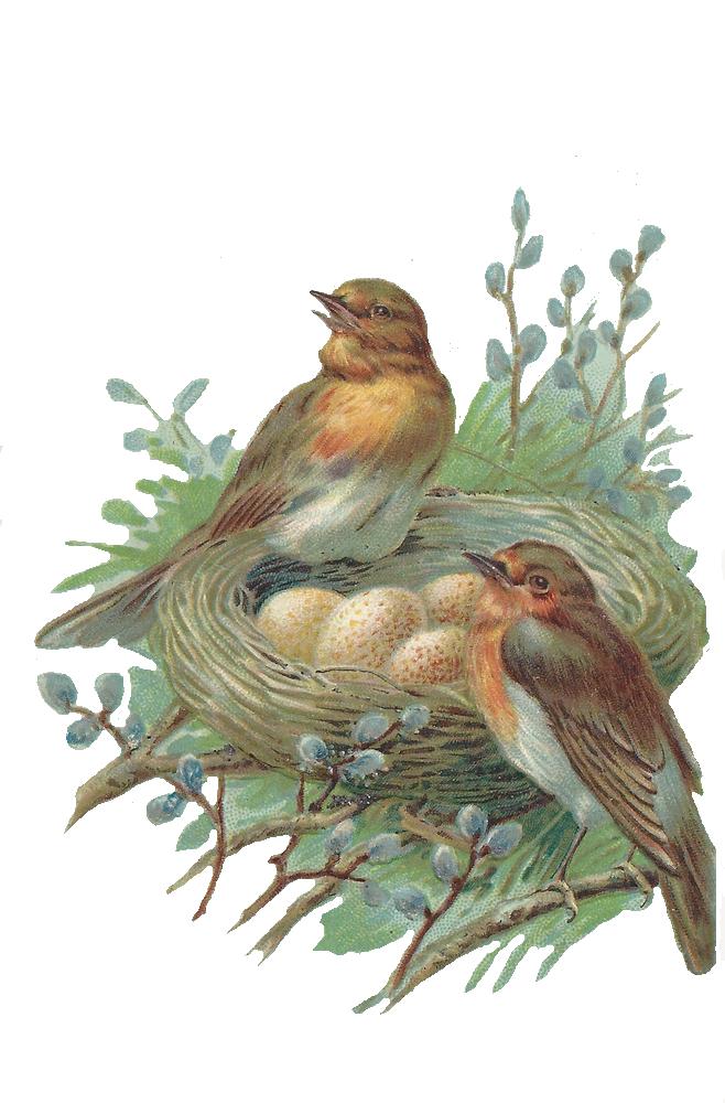 Nest clipart sparrow nest. Egg cartoon bird transparent