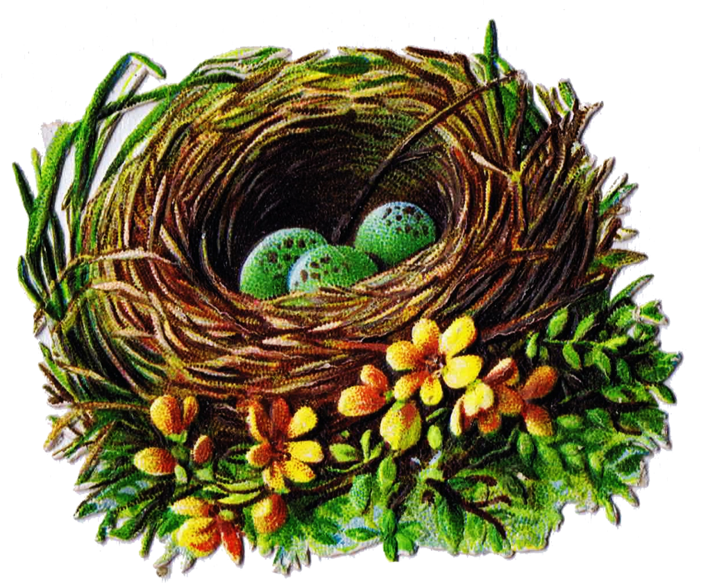 Bird and graphics antique. Nest clipart speckled egg