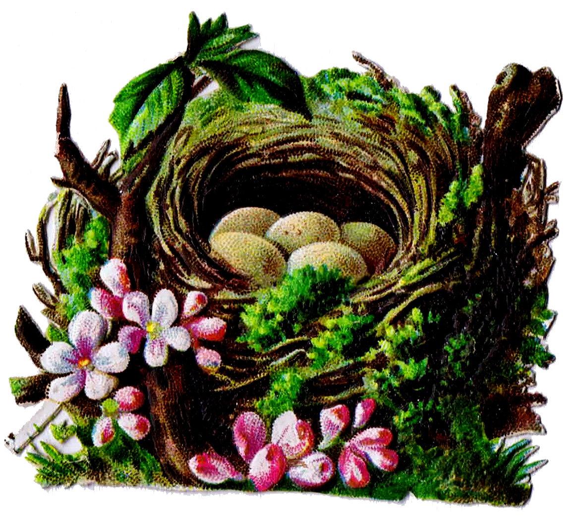 Nest clipart speckled egg. Bird and graphics antique