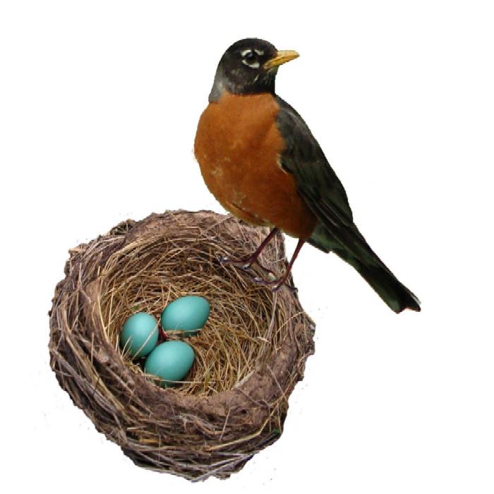 Nest clipart speckled egg. Ferrebeekeeper robinsnestweb