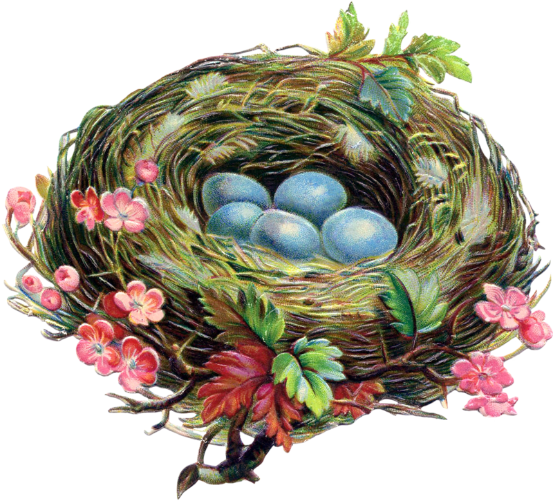 Nest clipart speckled egg. Eggs png easter clip