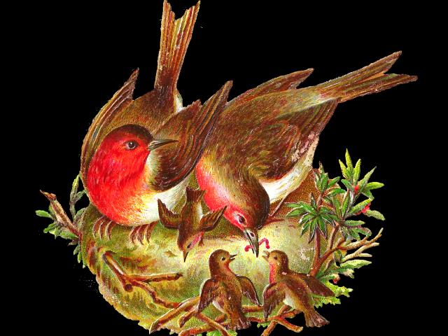 nest clipart vintage #131572300