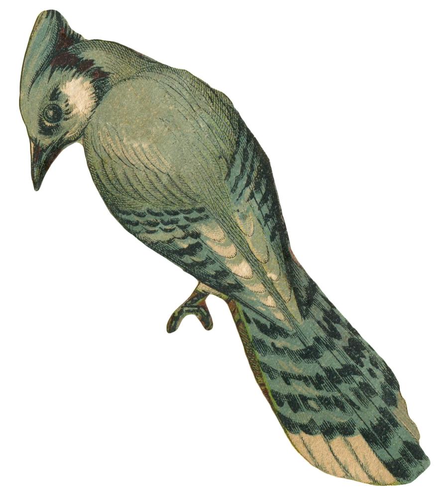 Faded blue jay art. Nest clipart vintage bird
