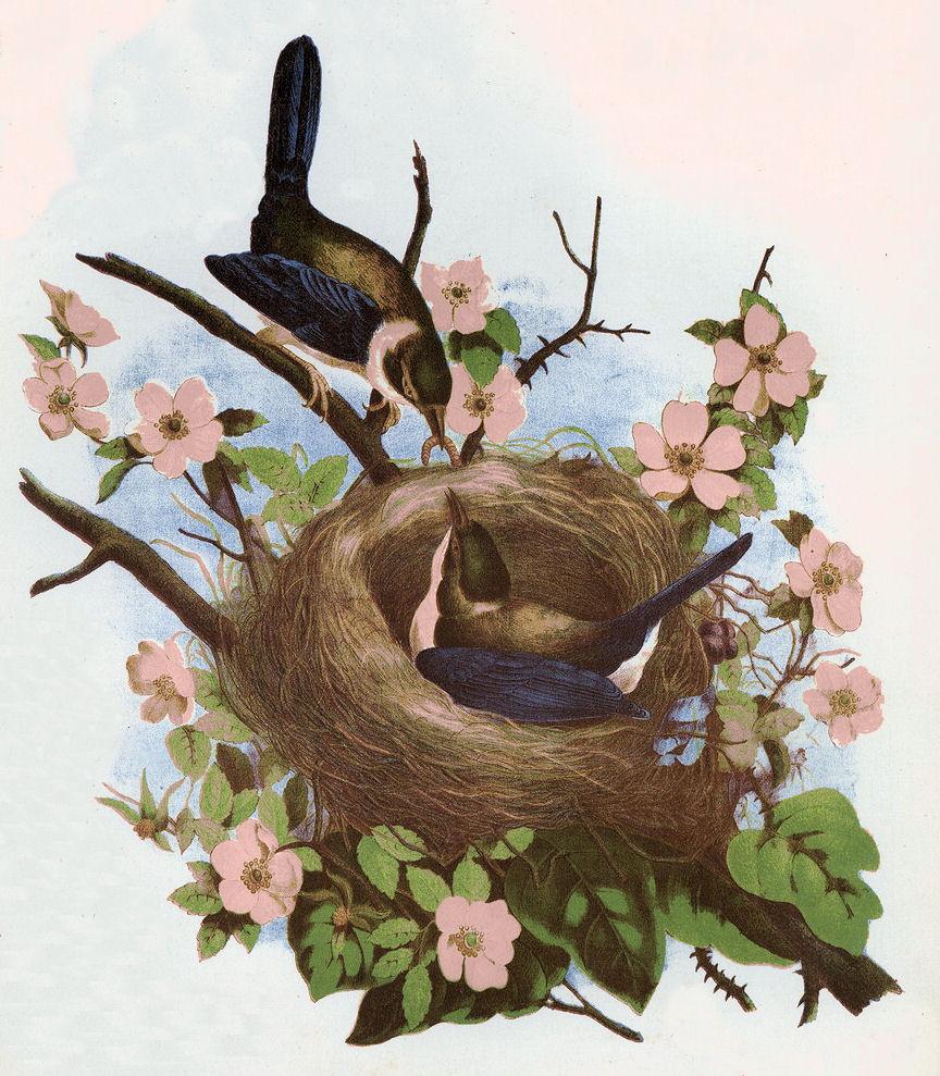 Free clip art pretty. Nest clipart vintage bird