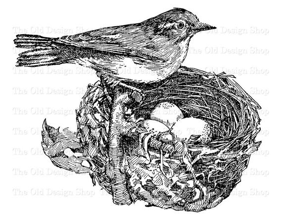 Eggs printable clip art. Nest clipart vintage bird